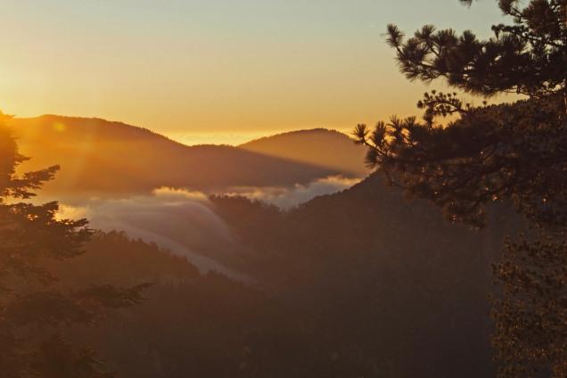 Angeles fog